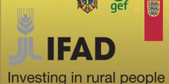 Asistență și suport tinerilor antreprenori autohtoni pentru granturile IFAD